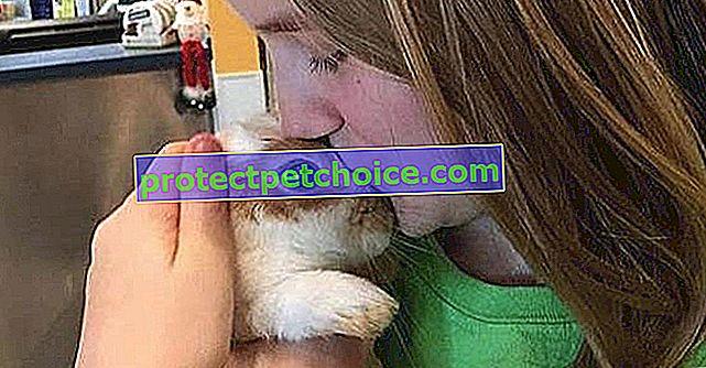 Volonter spasi život napuštenog zeca zbog previše nježnosti