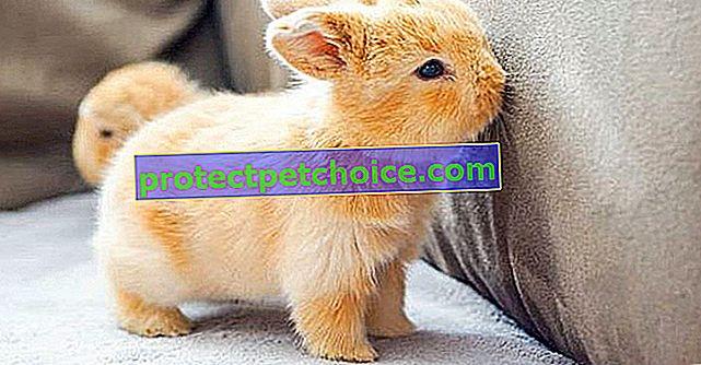 23 króliczki tak urocze, że chcielibyśmy je mieć ze sobą