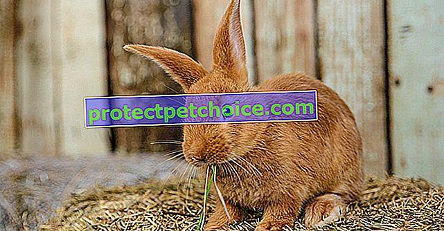 Alimentando a un conejo