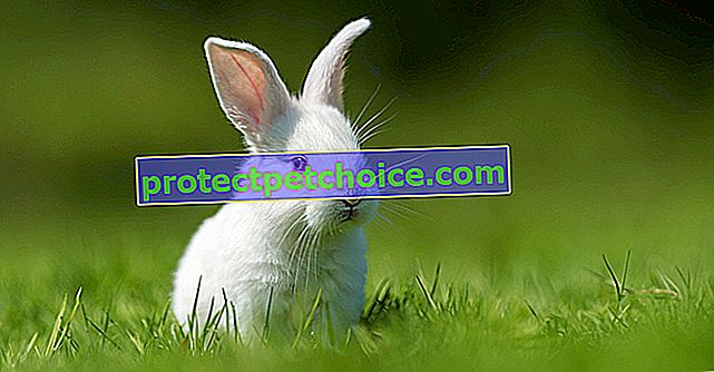 Řeč těla králíka