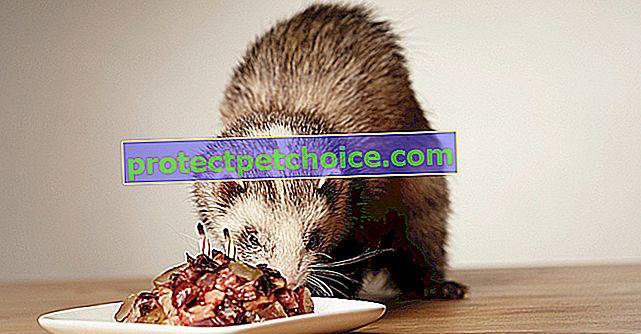 Hranjenje tvorom