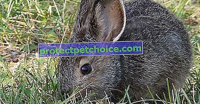 Избор на заек