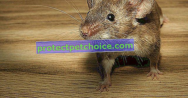 Ухапвания от мишки