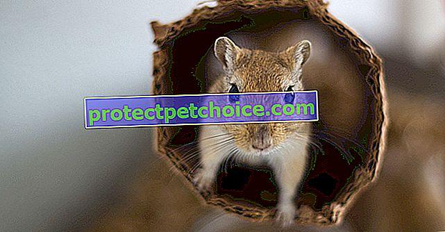 Niezbędne akcesoria do klatki dla myszoskoczków